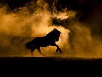 foto paard rook